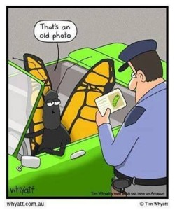 butterfly police